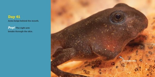 hidden-life-of-a-toad-spread